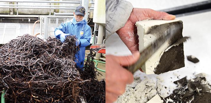 本蕨粉製造工程画像